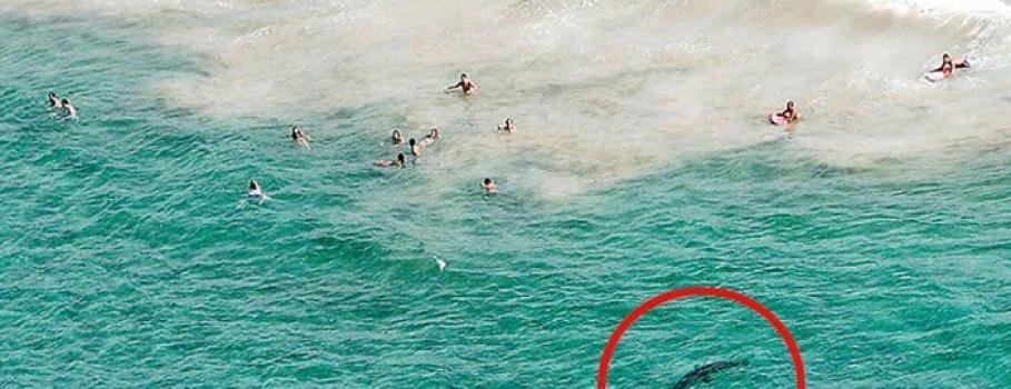 Specialized Helicopters registra convívio com tubarões